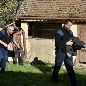 Neobična spasilačka akcija u Belišću: Zalutalog mladog labuda vratili su na Staru Dravu